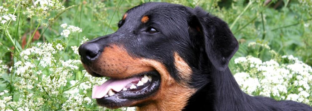 Hundezentrum-NRW